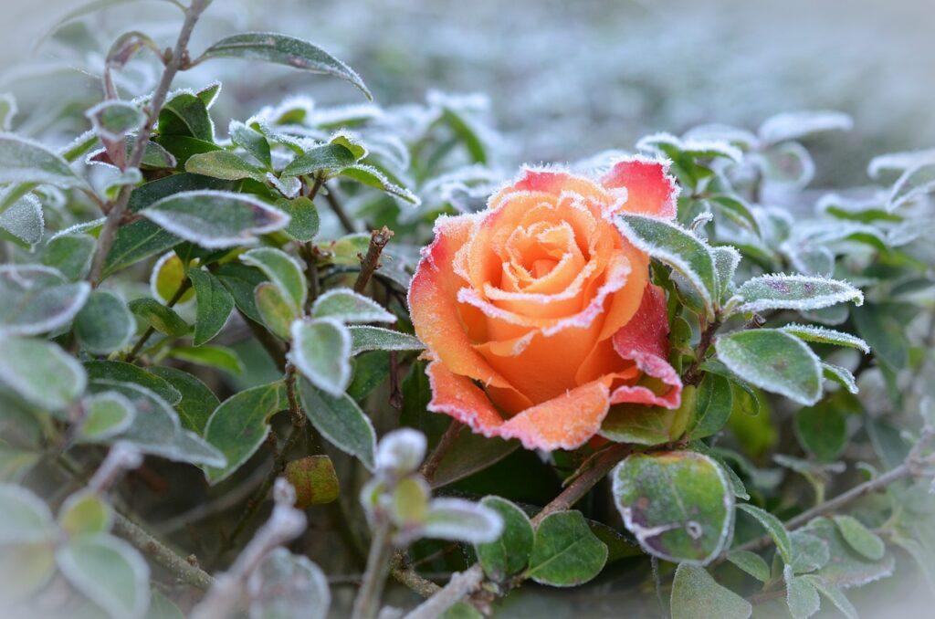 Idealne perfumy na zimę